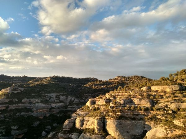 EyeEm Selects Tree Pinaceae Sky Landscape Cloud - Sky Rock Formation Rocky Mountains Geology Rock - Object Canyon