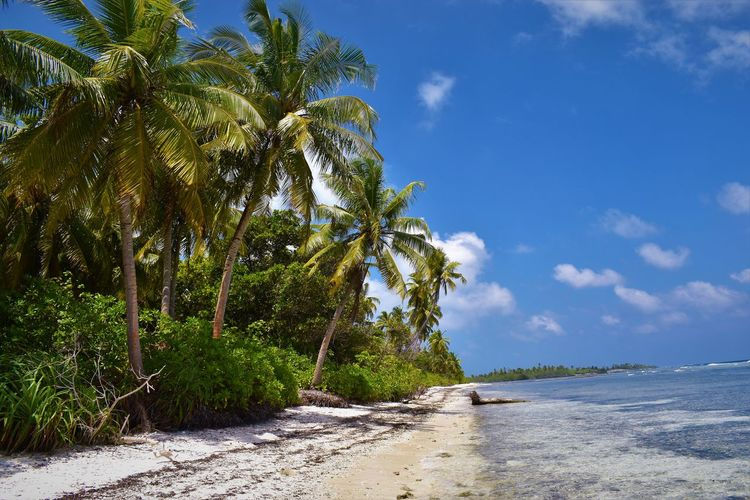 Addu Atoll Beach Beauty In Nature Blue Cloud - Sky Coconut Palm Tree Malediven  Nature No People Outdoors Palm Beach Palm Tree Palmenstrand Plant Scenics - Nature Sea Sky Tranquil Scene Tranquility Tree Tropical Climate Tropical Tree Water Палм-Бич 棕櫚海灘