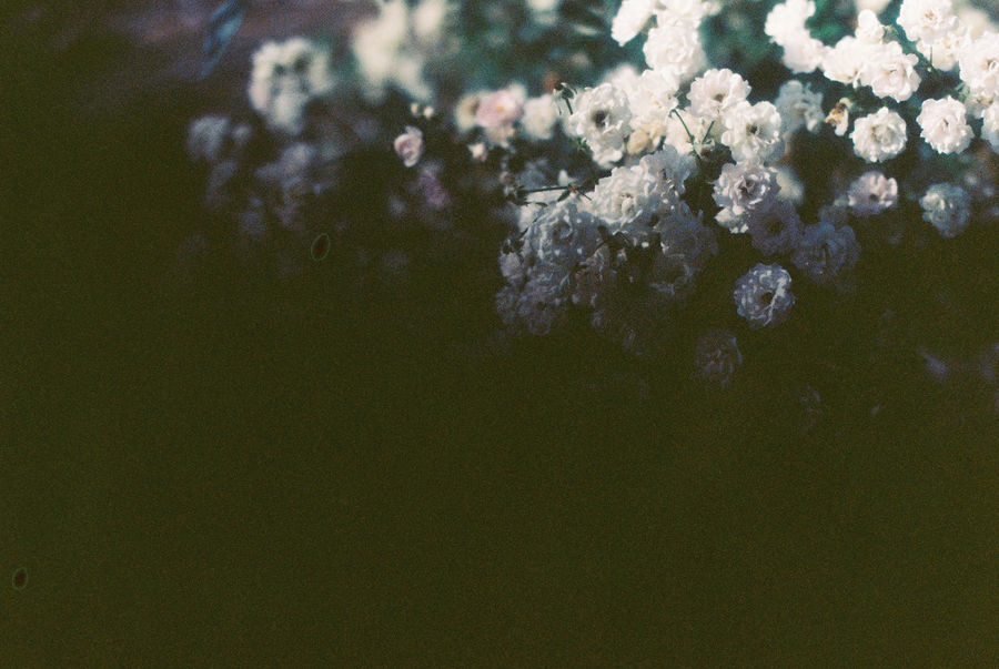 Film 35mm Film Analogue Photography Film Photography Light And Shadow Flowers Sunny Day