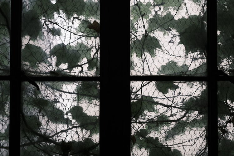 Trees in forest seen through glass window