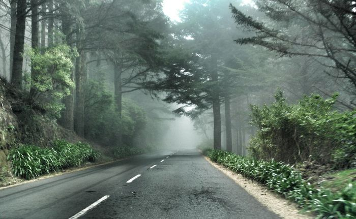 Asphalt Asphaltography Driving Empty Road Forest Forest Road Forests Mystic Forest Mystical Atmosphere Road Road Trip Roadmap Roadtrip Scenics The Way Forward Vanishing Point