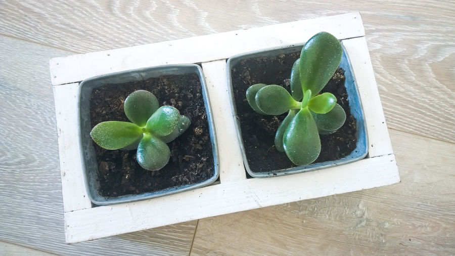 Close-up Day Decoration Green Color Growth High Angle View Indoors  Leaf No People Plant Seedlings Tray Wood - Material