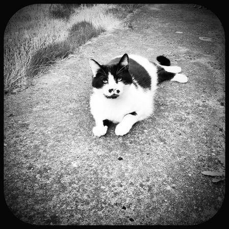Cat Bw_collection EE_Daily: Black And White Sunday Neighbors Cat