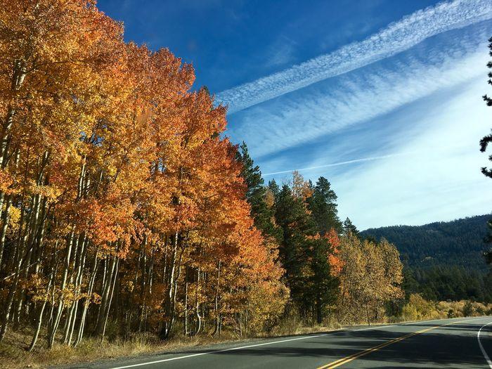 Road Trip Tree