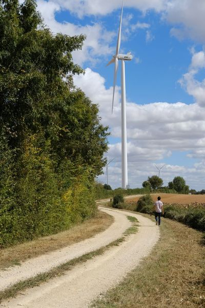 Tree Wind Turbine Wind Power Technology Alternative Energy Full Length Fuel And Power Generation Sky Cloud - Sky Industrial Windmill Renewable Energy Agricultural Field Environmental Conservation Windmill