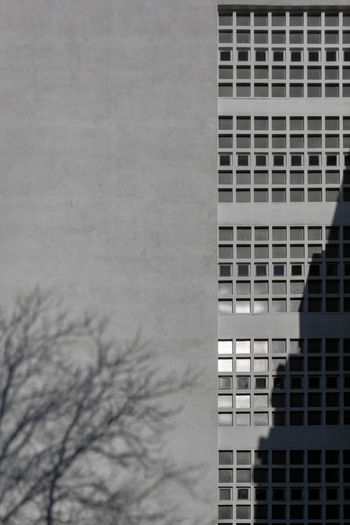 Built Structure Architecture Building Exterior Building Window No People Office Nature Tree Sky Outdoors Day Bare Tree Office Building Exterior City Low Angle View Modern Copy Space Pattern Reflection Skyscraper Facades Facade Building Facade Detail Windows Small Windows Shadow Shadow Of Tree