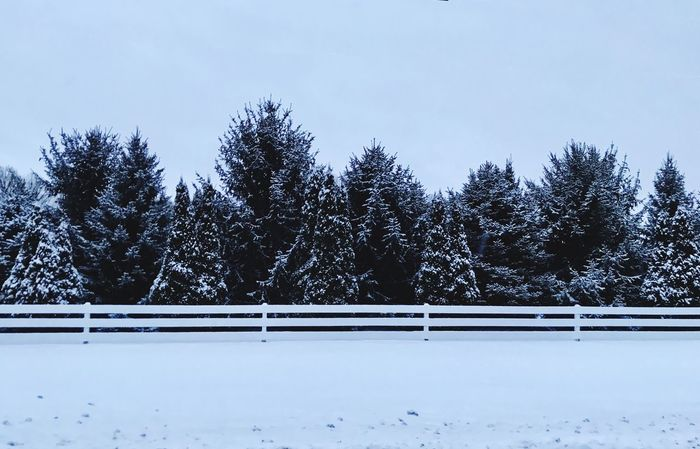 Early Morning Snow Cold Temperature Snow Winter Tree Nature Tranquility Beauty In Nature Tranquil Scene No People Scenics Outdoors Landscape