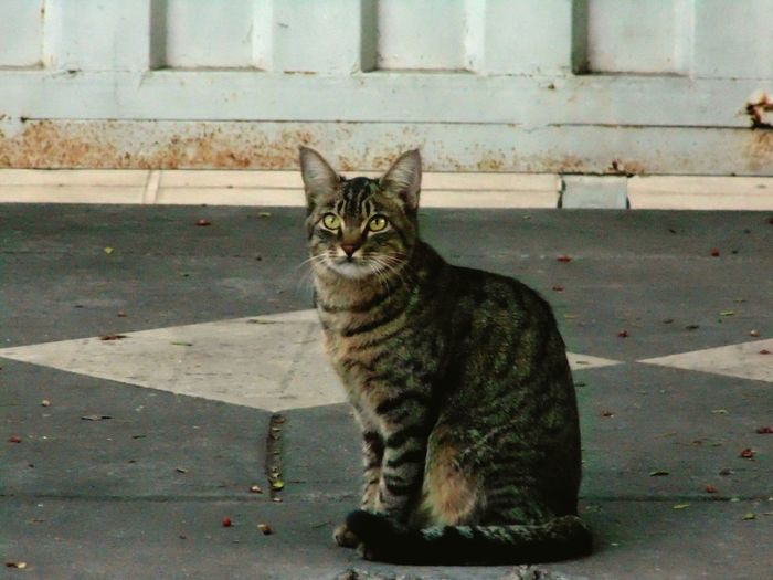 One Animal Animal Themes Domestic Animals Pets Domestic Cat Cat Mammal Sitting Looking Away Feline Whisker Alertness Zoology Day Stray Animal Animal No People Belo Horizonte, Brasil Planalto