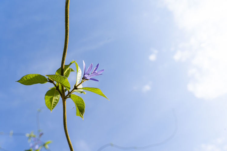 Low angle view of flowering plant against sky