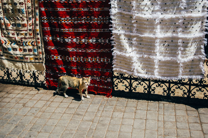 Carpets Cat Feline Marrakech Morocco Outdoors Street Tapestries