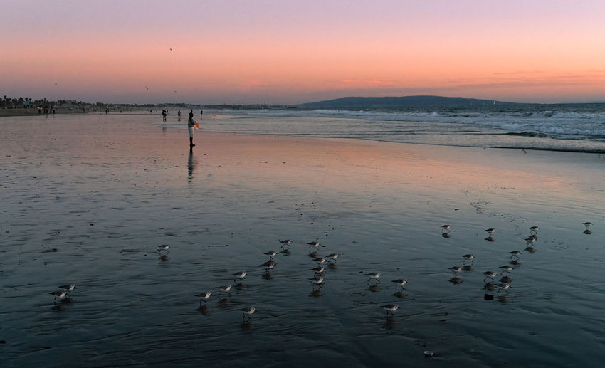 Birds swimming in sea at sunset