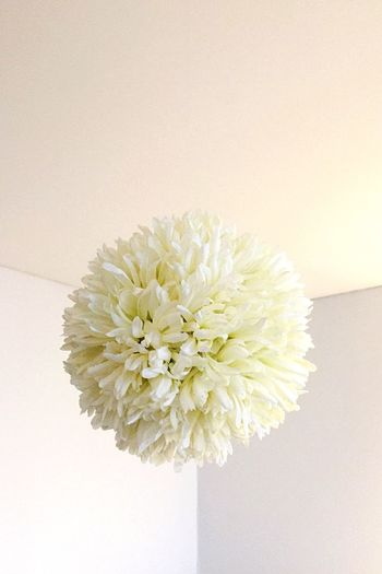 No People White Flower White Flower Ball Day Indoor