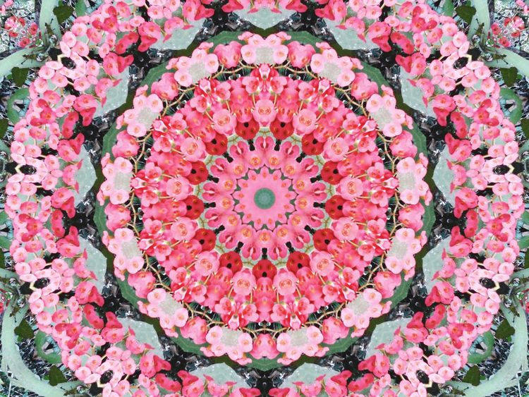 Flower Nature Plant Psicodelico Mandala