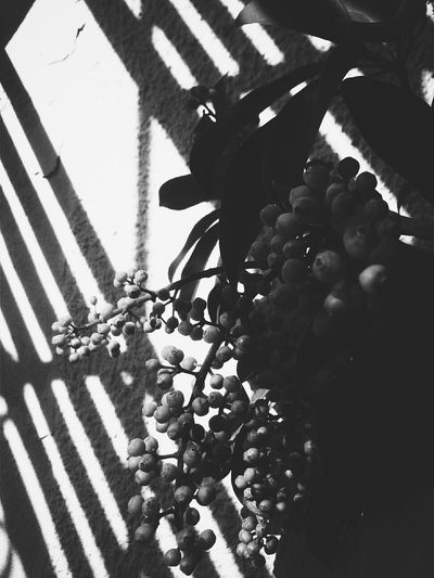 Light And Shadow Mothernature Light Geometry Naturallight Blackandwhite Black And White Collection  Lightanddarkness