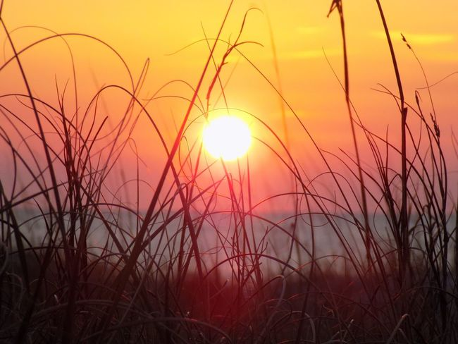 Ombre Sun Sunset Beauty In Nature Orange Color Nature Sky Scenics No People Outdoors Silhouette Tranquility Tree Sunlight Water Day