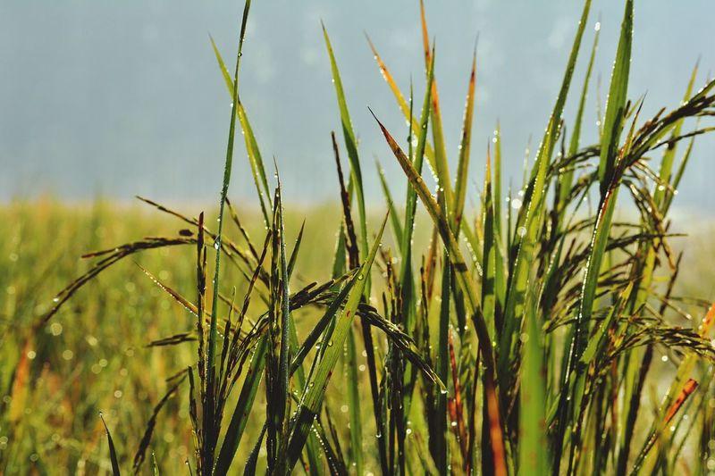 Nature, Dew, Crop, Fresh, Beauty First Eyeem Photo
