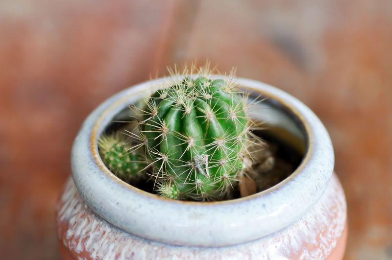 cactus in the