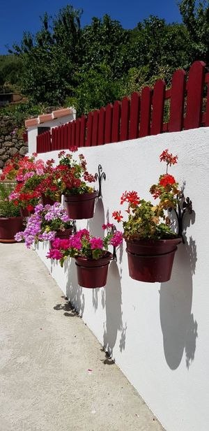 summer Flower Tree Red Summer Sky Architecture Bougainvillea Plant Life Window Box Flower Head Potted Plant