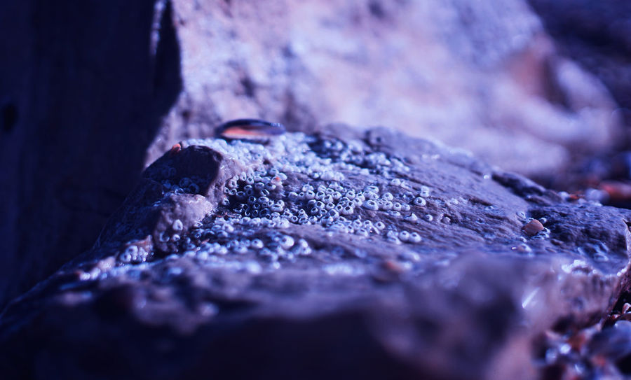 Selective Focus Close-up Textured  Tree Rock No People Nature Rough Rock - Object Day Solid Wood - Material Backgrounds Full Frame Tree Trunk Outdoors Plant Trunk Plant Bark Pattern Bark Marine
