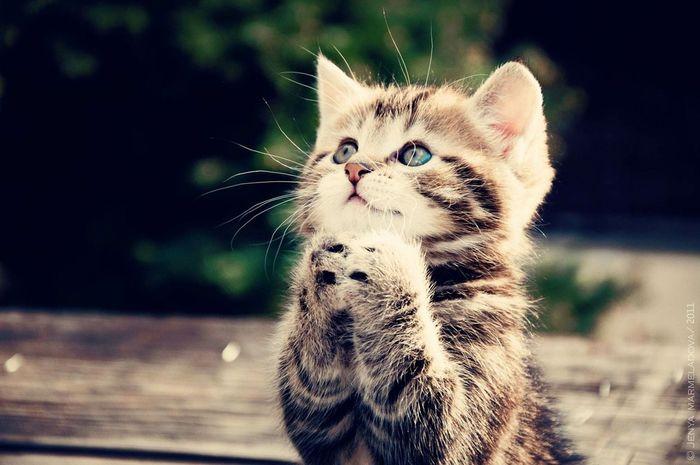 Que lindo gatito ⊙﹏⊙ First Eyeem Photo
