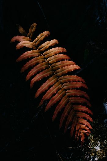 Close-up of fern growing on field at night