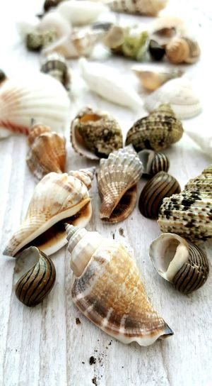 Seashells Close-up Freshness Full Frame Focus On Foreground Outdoors Heap Collection No People Shell Seaside Marine Coast Shells🐚 Shells On Wood Group Of Objects Tranquil Scene Nature Coastal Life