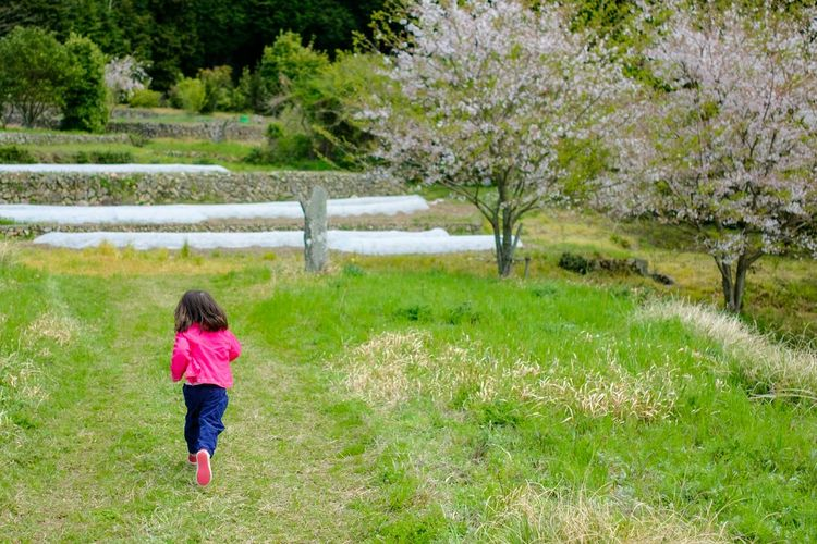 Rear View Grass One Person Outdoors Day Nature Tree Healthy Lifestyle People One Woman Only Only Women One Young Woman Only Beauty In Nature Run Country Road Japan Cherry Blossoms Sakura X-PRO2 Xf23mmf2
