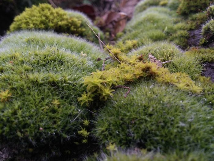 Nature Growth Green Color No People Day Close-up Outdoors Plant Beauty In Nature