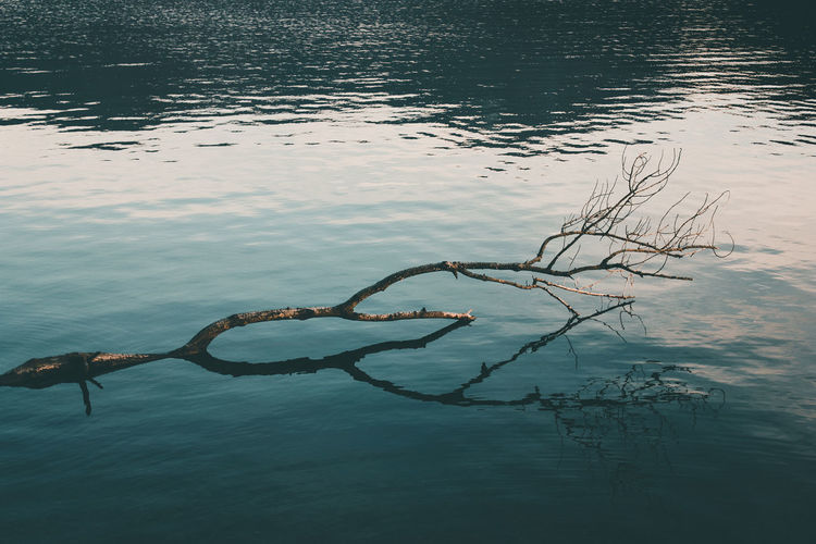 High angle view of driftwood in lake