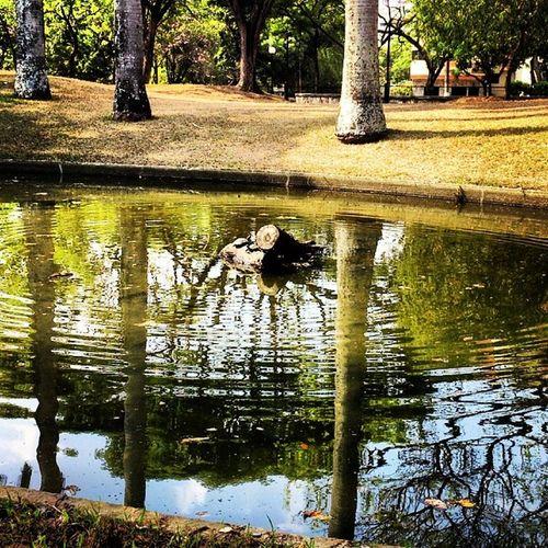 Prebo Photo Moment tortugas Park Water Sun
