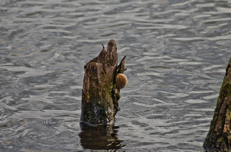 Water No People Day Nature Lake Wood - Material Outdoors High Angle View One Animal Focus On Foreground Close-up Rippled Vertebrate Motion Animal Themes Animal Waterfront Post Wet Wooden Post EyeEm Nature Collection Berlin