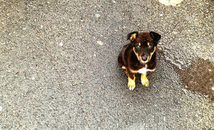 Puppy eyes Puppy Rainy Day Puppy Eyes Take Me Home