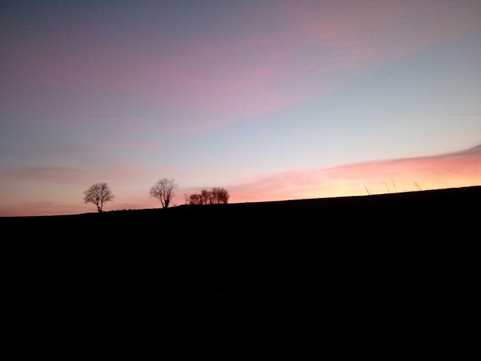 Tree Sunset Silhouette Bare Tree Rural Scene Astronomy Sky Landscape