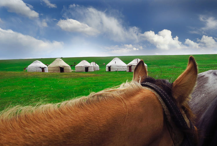 Kyrgyzstan Yurts Animal Animal Themes Cloud - Sky Day Domestic Domestic Animals Field Grass Horse Land Livestock Nature No People Nomadic Life Nomadiclife One Animal Outdoors Sky Vertebrate