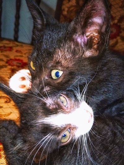 Pets Domestic Animals Animal Themes Two Kittens Two Kittens PlayingMaleandfemale Looking At Camera Feline Whiskersonkittens No People 😇😇😇 Close-up Kittens Of Eyeem Domestic Kittens Day Portrait Kitten Photography Kittens Lover 😻🐱 Kittensjoy Love Animals💕 Photo Of The Day Move On Eyeem PhonePhotography Love Photography Emography Eyeemphoto