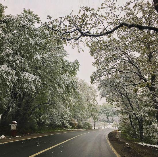 Tree Road Water