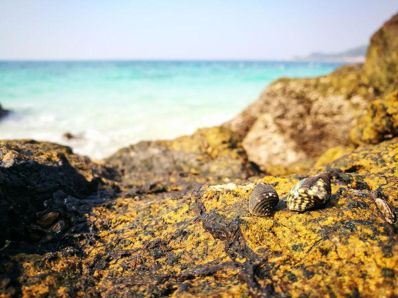 Light Sea Beach Seascape Tropical Tropical Island Vacations Island Thailnad Landscape Coastline Blue Sky Blue Sea Wave Water Tropical Seas Sunlight Nature Beauty In Nature Rock Beach Shells Green