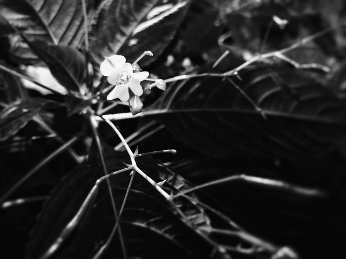 Black And White Photography Selective Focus Beauty In Nature Nature по утру Real Life Summer Light And Shadow Blackandwhite No People Close-up Shadow Day Outdoors