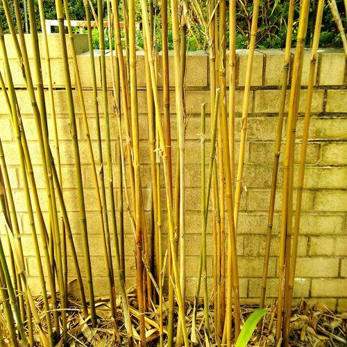 Bamboo Boo Stray Leaf Garden