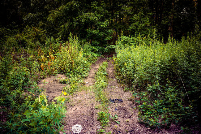 Path into the Forest Beauty In Nature Day Direction Foliage Footpath Forest Green Color Growth Land Lush Foliage Nature No People Non-urban Scene Outdoors Plant Scenics - Nature The Way Forward Trail Tranquil Scene Tranquility Tree WoodLand
