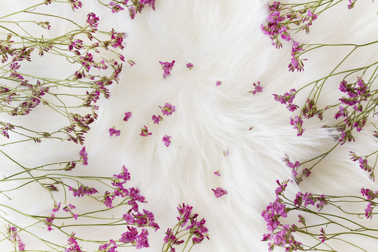 High angle view of white flowering plants on bed