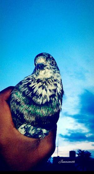 Countryside Pigeon Bird  Pigeonselfie Selfie Time Birdlover Nature Poetry In Pictures