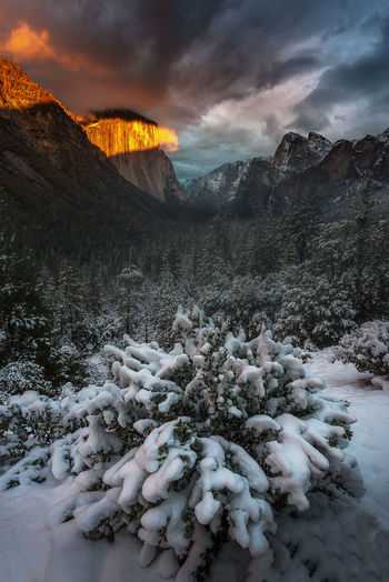 Charming of Yosemite National Park in the winter Winter Yosemite National Park California Landscape Photo Beauty In Nature Beautiful Mountain Half Dome Rock Granite Snow Destination Vacations Travel Destinations USA Forest Holiday My Best Photo The Great Outdoors - 2019 EyeEm Awards
