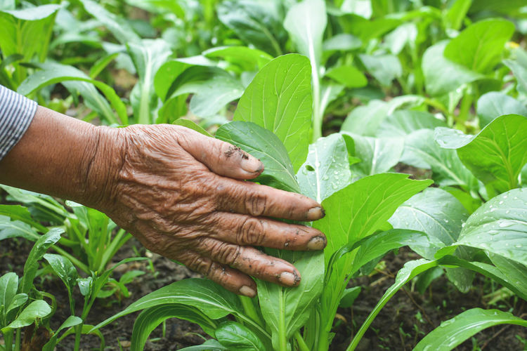 Close-up of man hand holding leaf