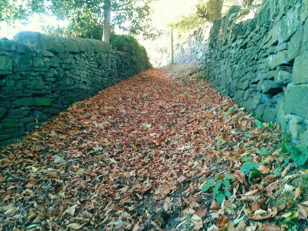 Drystonewalls Pathways Autumnbeauty Autumn Leaves Pathway Autumnleaves Beauty In Nature No People Leaves Tranquility Sunset Autumnbeauty Outdoors Autumn Tranquil Scene Sunlight Nature Landscape Shadow Low Angle View