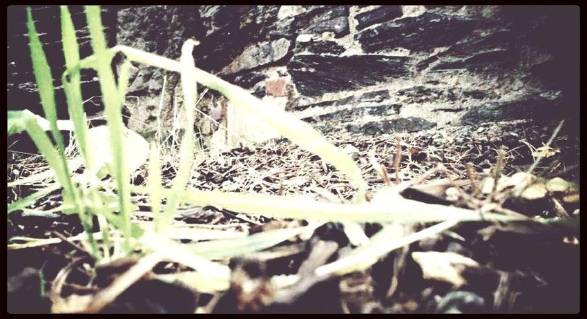 Photography Nature Art Grass