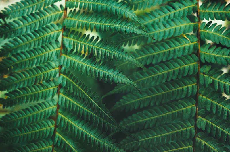 Backgrounds Beauty In Nature Botany Close-up Day Fern Fragility Frond Full Frame Green Color Growth Leaf Leaves Natural Pattern Nature No People Outdoors Palm Leaf Pattern Plant Plant Part Vulnerability