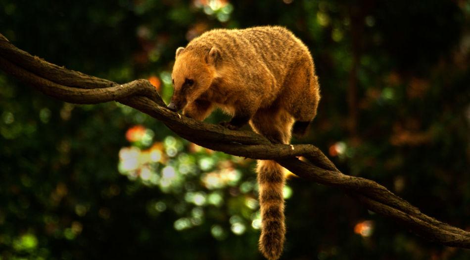 Brazil Zoo Animal Themes Mammal Nature No People One Animal Outdoors