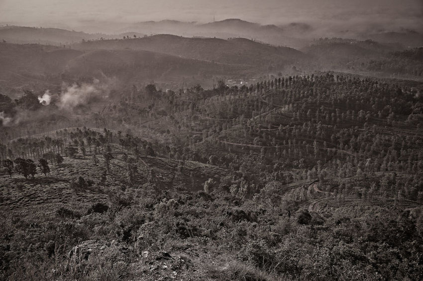 Rural India India Kerala Wayanad South India Blackandwhite Landscape Tranquil Scene Environment Beauty In Nature Scenics - Nature Tranquility Land No People Plant Non-urban Scene Fog Morning Nature Mountain High Angle View Outdoors Remote Hazy