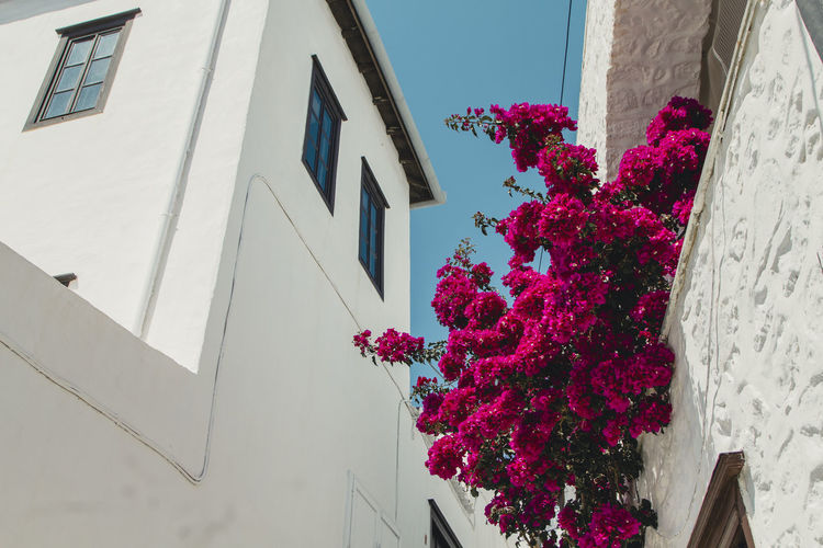 Architecture Beauty In Nature Bouquet Building Building Exterior Built Structure Day Flower Flower Head Flowering Plant Fragility Freshness Growth House Low Angle View Nature No People Outdoors Pink Color Plant Purple Residential District Vulnerability  Window
